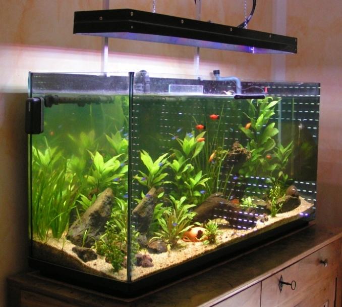 Rampe a led aquarium eau douce for Eau douce aquarium